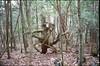 (✞bens▲n) Tags: pentax lx kodak e100g fa 43mm f19 limited film analogue slide japan yamanashi aokigahara woods forest trees stump nature