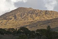 03041813 Knockatee-Beara Pen (Philip D Ryan) Tags: ireland countykerry bearapeninsula lehidharbour knockatee woodlands deciduous winter branches trees woodland cahamountains