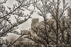 Monastir de St. Pere de Rodes amb boira. (Empordà - Catalunya). (Antoni Gallart i Vilarrasa) Tags: nikon d800 catalunya cataluña catalonia monastir monasterio monastery santperederodes boira niebla fog arbres arboles trees monocromo bw bn color antoni gallart 2018 girona gerona