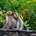 Phnom Sampeau Monkeys, Battambang thumbnail