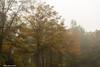 Foggy Tree Line (that_damn_duck) Tags: nature tree trees foggy fog fall fallcolors autumn colorsofautumn treeline forest