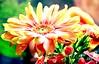 Reason to Smile (barbara_donders) Tags: natuur nature spring lente kleurrijk kleuren colors colorful flowers bloemen bokeh macro prachtig mooi magical beautifull boeket