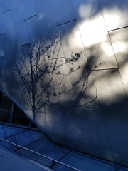 Spring comes to Berkeley (quinn.anya) Tags: spring berkeley tree shadow sun bampfa
