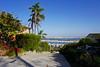 Strolling through Point Loma - San Diego, CA (SomePhotosTakenByMe) Tags: palm palme skyline shelterisland urlaub vacation holiday usa america amerika unitedstates sandiego stadt city pointloma california kalifornien outdoor