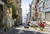 dog on the street (anilcagal) Tags: dog vespa turkey istanbul art streetmusic streetphoto play hair purple music girl street people photo road endless old man with portrait portre natural doğal going photography streetphotography yellow sony sonyalpha6000 sel50f18 building workers shop window