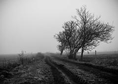 Morning mist..... (Hildingsson) Tags: halland södrabjörkäng varberg morgondimma blackandwhite bw svartvitt