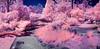 False Color BBG Iris Garden (©Delos Johnson) Tags: lifepixel nir infrared bbg garden samsung nx30