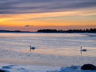 Swans and Rising Sun