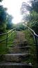 Stairs to heaven (Ahmed N Yaghi) Tags: stairs bukit petaling kuala lumpur going up forest