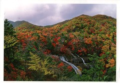 Autumn foliage_Sancheong-gun Gyeongsangnam-do (Kogotok7) Tags: autumn foliage