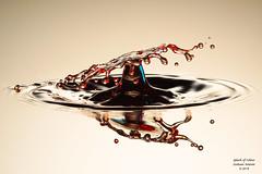 A Splash of Colour. (Graham R Watson) Tags: splashart highspeed splash liquid liquidcollisions liquidsculpture drips droplet