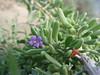 Flor (currete84) Tags: famara lanzarote canarias españa spain playa beach dunas dune arena sand montaña riscodefamara mar oceano sea blue atlanticocean oceanoatlantico