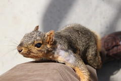 292/365/3579 (March 30, 2018) - Squirrels On Early Spring Day in Ann Arbor at the University of Michigan (March 30th, 2018) (cseeman) Tags: gobluesquirrels squirrels annarbor michigan animal campus universityofmichigan umsquirrels03302018 spring eating peanut marchumsquirrel overcast art climber squirrelclimber 2018project365coreys yeartenproject365coreys project365 p365cs032018 356project2018