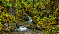 Lush (Philip Kuntz) Tags: rainforest alaskarainforest virgincreekfalls waterfall falls alyeska girdwood alaska