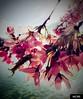 Spring (Miamy7) Tags: naturaleza naturalezacautivadora flores flowers macrounlimited macro spring primavera