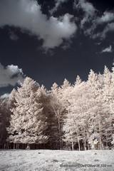 720nm_DSC1599 (achrntatrps) Tags: 720nm hoyar72 photographe photographer alexandredellolivo dellolivo suisse nikon d5300 ir infrarouges lumière light licht luz jura