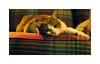 A hard days night ! cat style (CJS*64) Tags: cat lazy pet sleepy panasonic panasoniclx100 lx100 cjs64 craigsunter cjs hardday