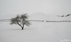 Gamla Uppsala (stewartl2010) Tags: other minimalism barrows tree historical ancient simplicity winter sweden kungshögarna gamlauppsala snow isolation royalmounds uppsala uppsalalän se