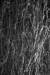 IMG_9605 copia (formicacreativa) Tags: stradacomun percorsociclopedonale ferrazze verona vegetazione piante gelo brina corsodacqua sorgenti macro pianta animale sentiero legno albero foschia strada cielo sentierobattuto erba foresta parco paesaggio
