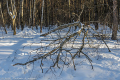2018-03-19-08-55-57-7D2_4027 (tsup_tuck) Tags: 2018 march moscow spring woods