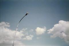 (Benedetta Falugi) Tags: sky blue believeinfilm palo clouds air film filmisnotdead filmphotography fujisuperia ricoh500rf analogphotography analog analogue analogic istillshootfilm ishootfilm thefilmcommunity spring day sunnyday minimal minimalism mood morning shootingfilm benedetafalugi 35mm pellicola view ilookthesky lines line