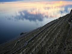 Reflexion (Jibep) Tags: lausanne sunset vineyards cloud lake
