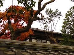 IMG_2237 (hattiebee) Tags: japan nara autumn fall momiji maple leaves rooftop rooves tiles traditional