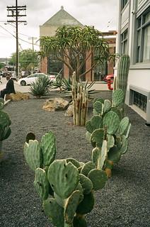 drought tolerant plants.