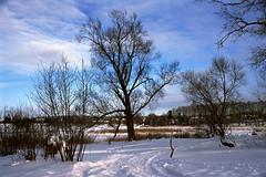02 - [Precisa100] (stepanov9) Tags: minoltadimagescanelite540 nikonf80 solnechnogorskdistrictnearmoscow tree water lake landscape