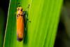 Orange Green #2 (AriyusAris) Tags: macro nature red green forest leaf leaves detail insect criket grasshopper orange