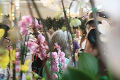 2018 JOS Show-0259 (tbottom) Tags: jos jacksonvilleorchidsociety jimroberts macrivenbark macsorchids staugustineorchidsociety suebottom floridasuncoastorchids thanhnguyen artrussell terrybottom orchids orchidsociety orchidshow orchidpictures cattleyas dendrobium oncidiums phalaenopsis