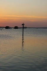 Off My Rocker (Michiale Schneider) Tags: water post pier sunset silhouette pelican bird landscape pineland florida michialeschneiderphotography orange black sky