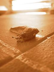 Slim Slow Slippery Slider (Patricia Woods) Tags: macro canon ixus 40 slug