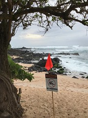 Do Not Swim (colonelchi) Tags: iphone 7 iphone7 iphone7plus apple phone smartphone trip vacation family wedding weekend tropical island familyvacation familywedding hawaii hawaiianisland hawaiianislands oahu northshore winter wintertrip islandgetaway getaway relaxation relax beach shore green tropicalisland islands unitedstates unitedstatesofamerica