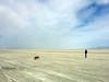 Playa haboob (simonov) Tags: blackrockdesert black rock desert nevada playa drylake dust storm haboob ingrid woman bella dog hund chien 狗 σκύλοσ madra cane 犬 perro 개 سگ собака الكلب germansheprador brd