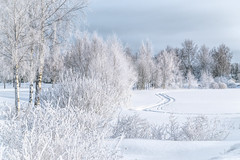 Winter (katrinlillenthal) Tags: winter landscape nature snow beautyinnature outdoor nopeople trees finland