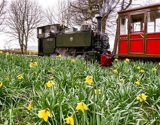 Amongst the Daffodils