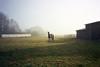 (michel nguie) Tags: michelnguie fog mist horse grass film analog écurie stable trees haze