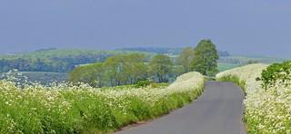 Spring flowers, Farnborough, Berkshire, England