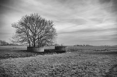 IMGP5969fx15 (hans hoeben) Tags: dutch field grow where we want hans hoeben dslr k5 holland netherlands together