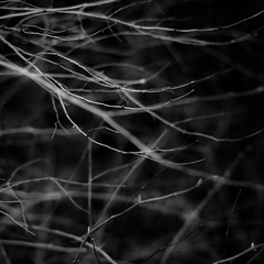 Thicket Details 048 (noahbw) Tags: captaindanielwrightwoods d5000 dof nikon abstract blackwhite blackandwhite blur branches bw depthoffield forest lines monochrome natural noahbw spring square woods