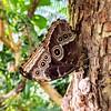 Kein Braunauge! (Mike Bonitz) Tags: deutschland germany sachsen saxony leipzig botanischergarten botanicalgarden universitätleipzig schmetterlinge butterfly braun brown instagram googlepixel