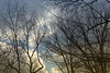Spingtime is Coming (Carol (vanhookc)) Tags: tree sky forest clouds blue nightfall sunset stormispassing nightiscoming sunissetting springiscoming branches limbsoftrees
