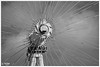 London Eye Axis (PixelRange) Tags: nikond7000 pixelrange nikkor18300mm sanjaysaxena londonicon londoneye londoneyecapsule capsule london giantstructure architecture bluesky closeup londoneyeaxis axis clouds sky bw blackwhite blackandwhite