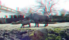 Blijdorp Rotterdam 3D (wim hoppenbrouwers) Tags: blijdorp rotterdam 3d anaglyph stereo redcyan zoo