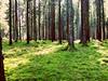 Grün (Antje_Neufing) Tags: moos wald natur deutschland rheinlandpfalz baum sonne