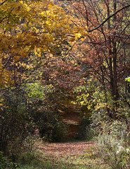 Tunnel In Colours (peterkelly) Tags: digital canon 6d ontarionature caledon ontario canada northamerica willoughbynaturereserve fall autumn forest trees path trail