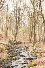 IMG_0503 (OculoMundi) Tags: trees woodland winter walking