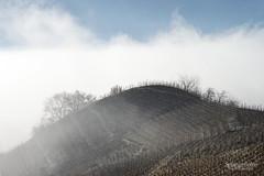 La colline - The hill (Solange B) Tags: colline hill vignes vines vignoble vineyard valais wallis chamoson vin wine suisse switzerland brume brouillard fog montagne mountain mist nikon d800 solangeb solangebelon