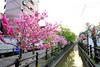 Sakura River (HCC1985) Tags: fuji xt10 sakura cherry river 123 新竹